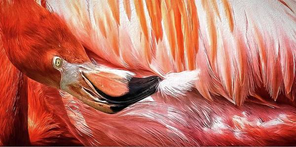 Photograph - Flamingo Feather by Alice Gipson