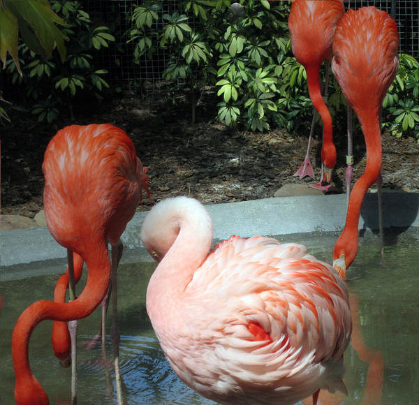 Photograph - Flamingo In Bloom by Elyza Rodriguez