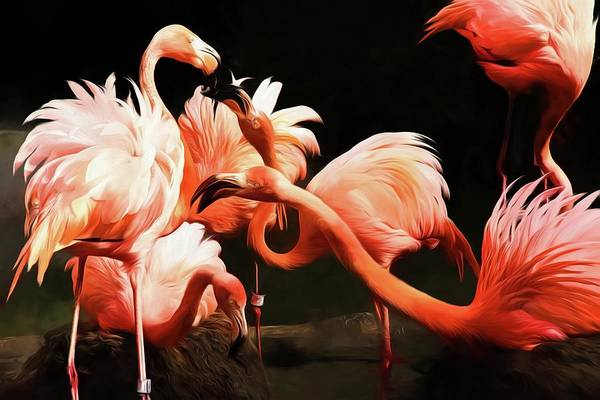 Photograph - Flamingo Kisses by Alice Gipson