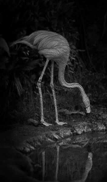 Photograph - Flamingo Lake by Maria Reverberi
