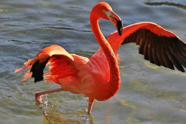 Wall Art - Photograph - Flamingo Love Dance by Valia Bradshaw