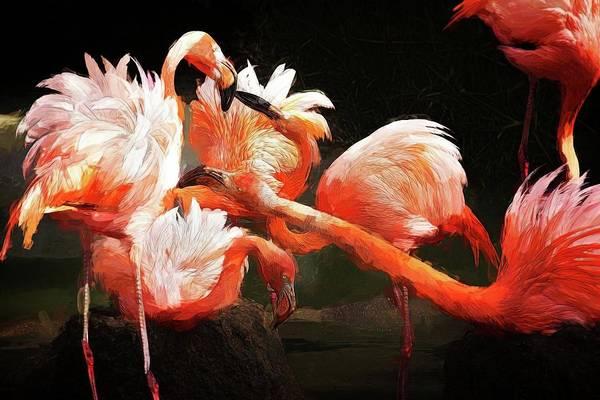 Photograph - Flamingo Mingles by Alice Gipson