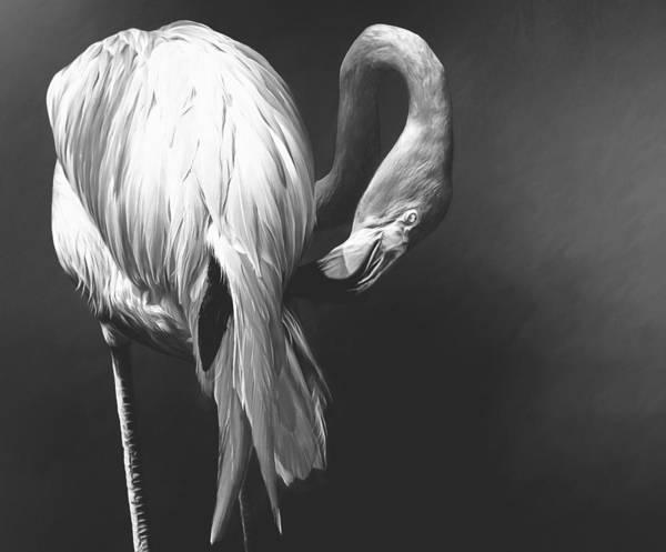 Photograph - Flamingo Noir by Alice Gipson