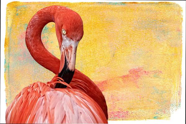Photograph - Flamingo On Yellow Stucco by Alice Gipson
