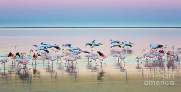 Wall Art - Photograph - Flamingo Panorama by Inge Johnsson