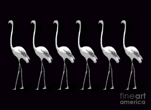Donegal Digital Art - Flamingo Pattern Design Monochrome by Eddie Barron