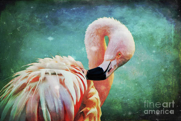 Digital Art - Flamingo Portrait by Angela Doelling AD DESIGN Photo and PhotoArt