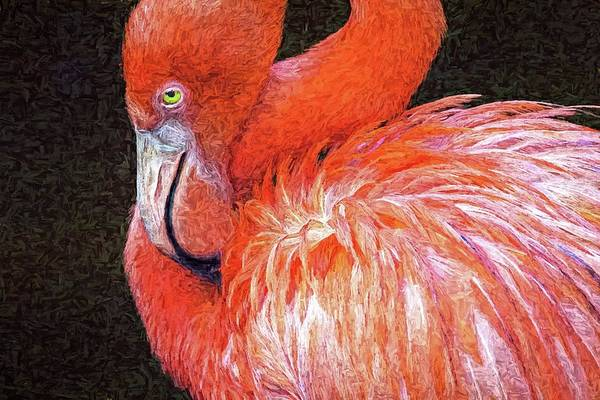 Photograph - Flamingo Reposed by Alice Gipson