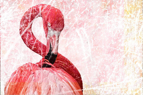 Photograph - Flamingo Scratches by Alice Gipson