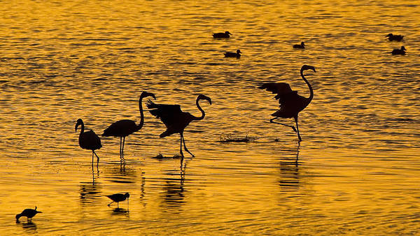 Wall Art - Photograph - Flamingo Silhouette by Basie Van Zyl