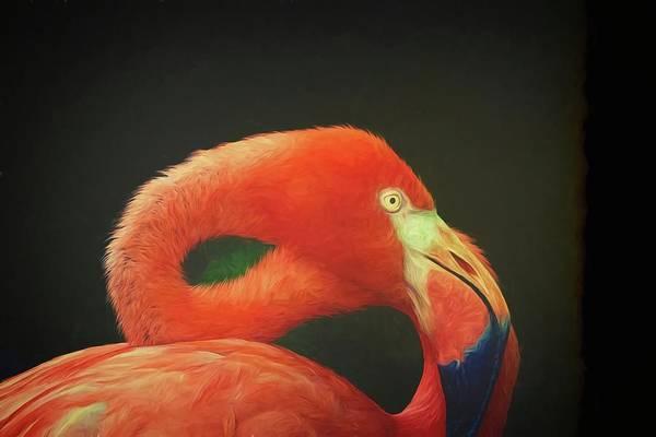 Photograph - Flamingo Silk by Alice Gipson