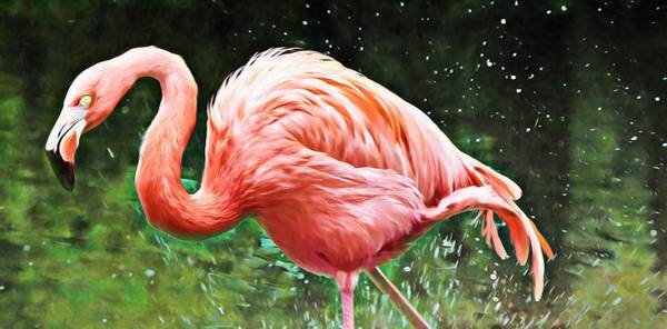 Photograph - Flamingo Splashes And Colors by Alice Gipson