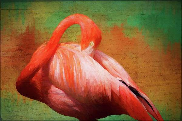 Photograph - Flamingo Whispers by Alice Gipson