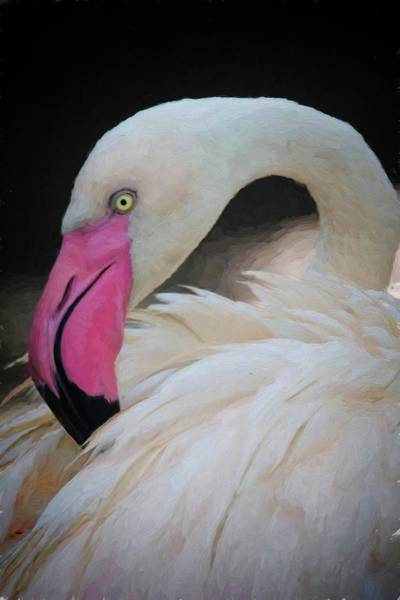 Photograph - Flamingo White by Alice Gipson