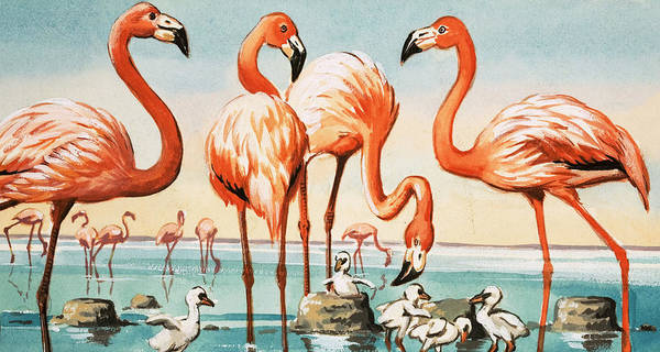 Flamingos Wall Art - Painting - Flamingoes by English School