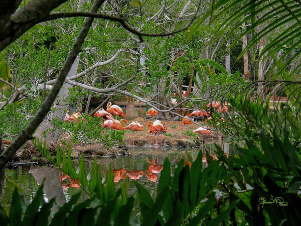 Photograph - Flamingos Framed By Ferns by Susan Molnar