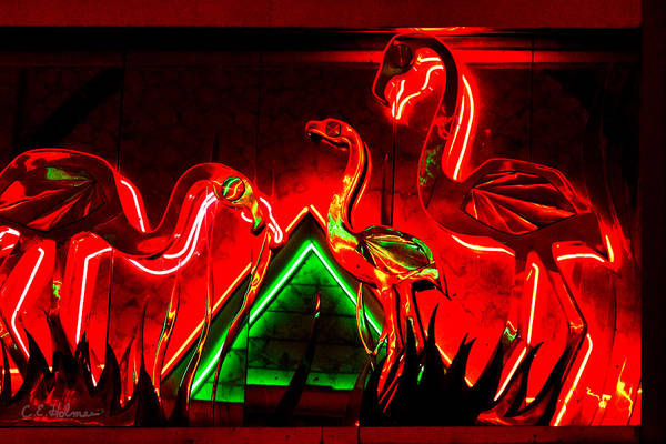 Photograph - Flamingos In Lights by Christopher Holmes