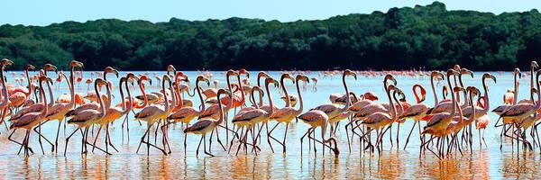 Photograph - Flamingos On Parade by Renee Sullivan