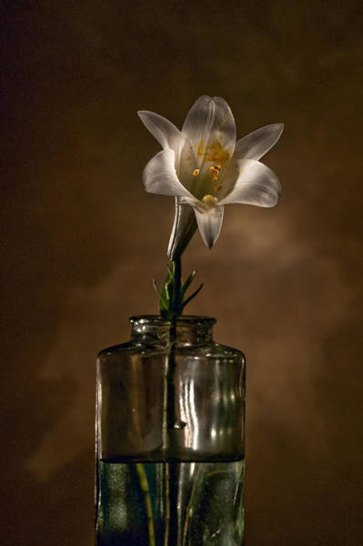 Photograph - Flashlight Series Easter Lily 3 by Lou  Novick