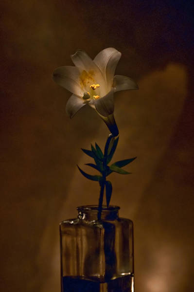 Photograph - Flashlight Series Easter Lily 4 by Lou  Novick