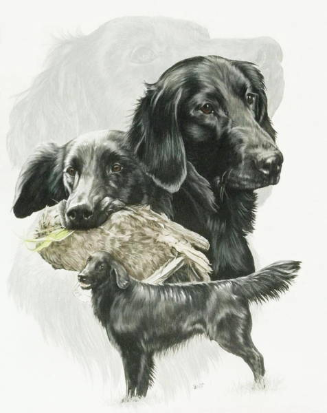 Mixed Media - Flat-coated Retriever Medley by Barbara Keith