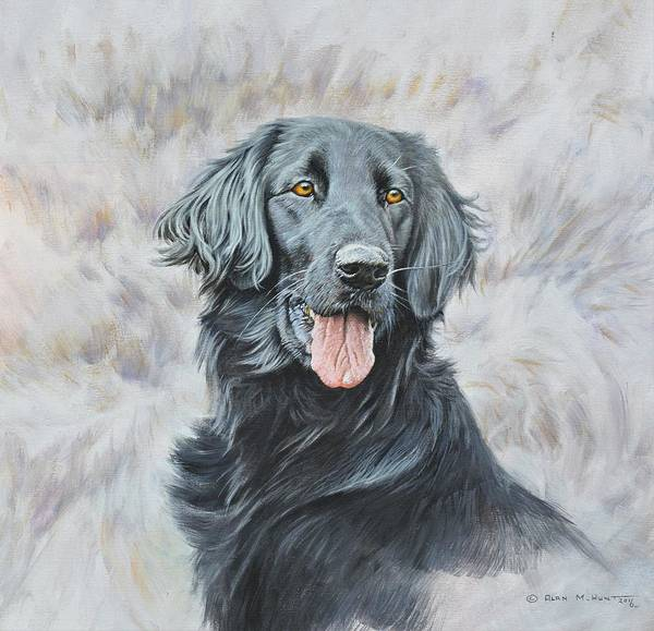 Painting - Flat Coated Retriever Portrait by Alan M Hunt