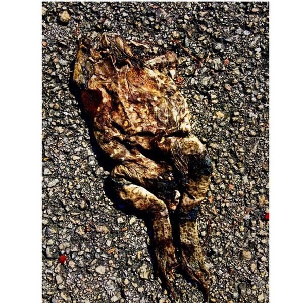 Death Wall Art - Photograph - Flatten Frog On Pavement by Juan Silva