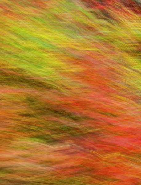 Wall Art - Photograph - Flayed Fall 9281 by Ginger Stein