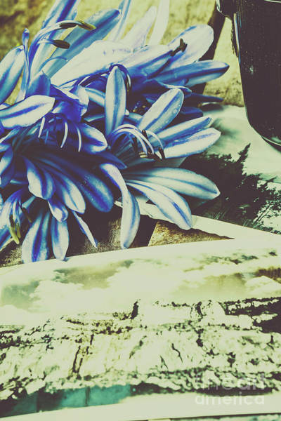 Agapanthus Photograph - Fleeting Feelings In Past Nostalgia by Jorgo Photography - Wall Art Gallery