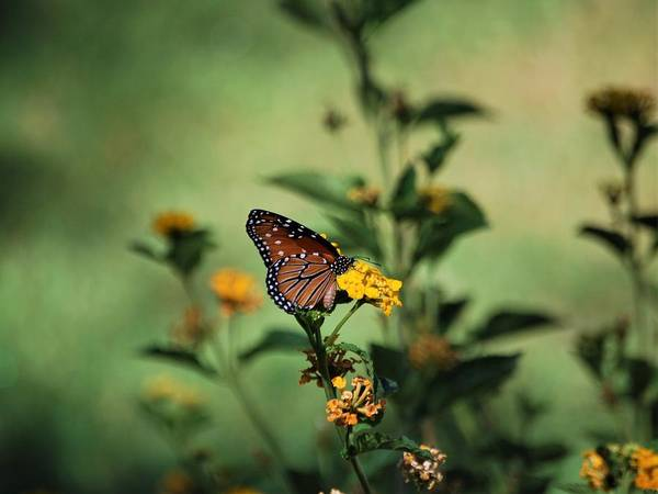 Photograph - Fleeting  by Sonja Jones