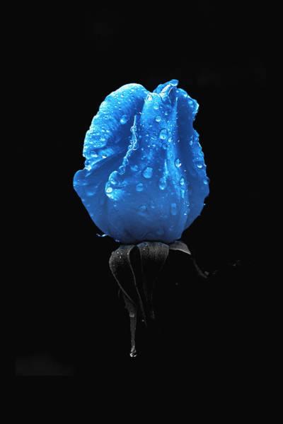 Furon Photograph - Fleur-bleue After Raining by Daniel Furon