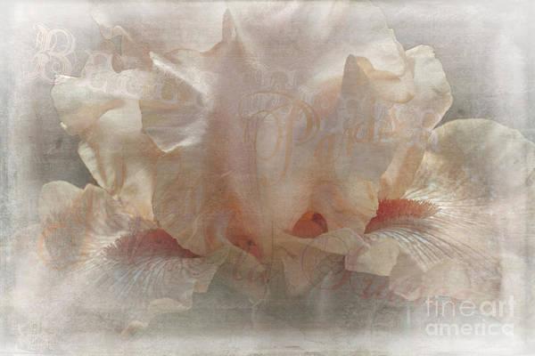 Photograph - Fleur De Lis by Elaine Teague