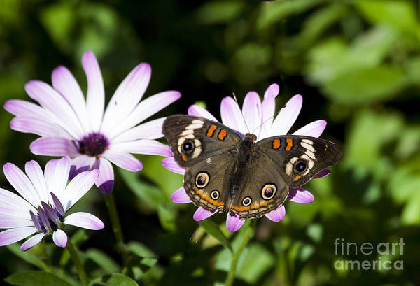 Wall Art - Photograph - Fleurs Violettes Adorned With A Papillon by Ruth Jolly
