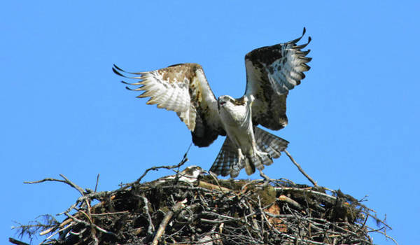 Photograph - Flew The Coop by Vivian Martin