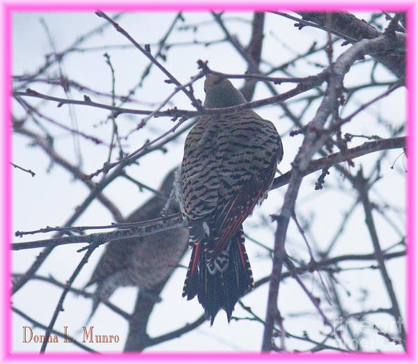 Photograph - Flicker  by Donna L Munro