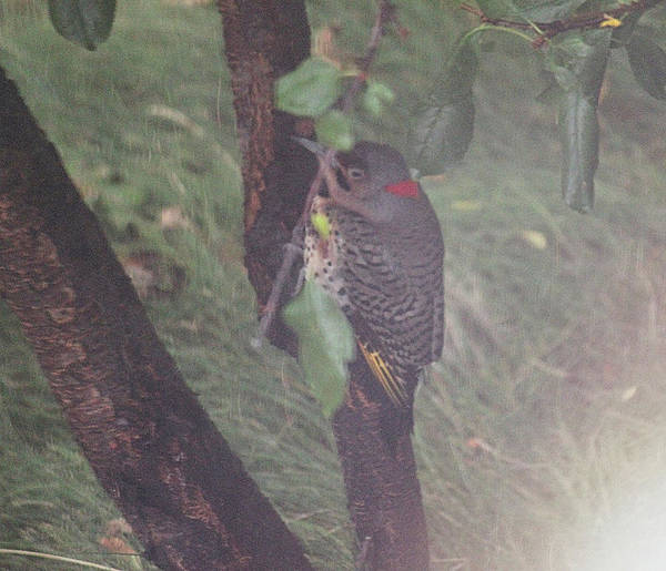 Photograph - Flicker In A Divet by Donna L Munro