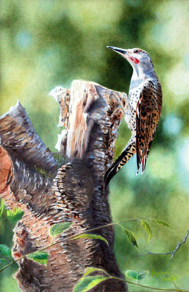 Northern Flicker Painting - Flicker On The Cherry Stump by Kimberly Wurster