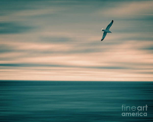 Photograph - Flight 832 by Edmund Nagele
