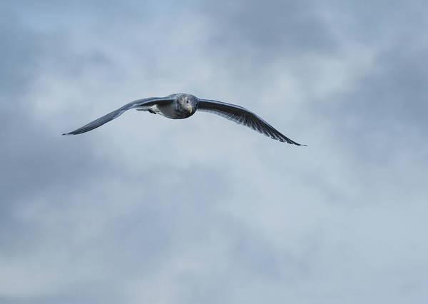 Photograph - Jonathan Livingston Seagull by Marilyn Wilson