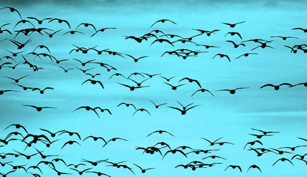 Wall Art - Digital Art - Flight In Turquoise by SharaLee Art