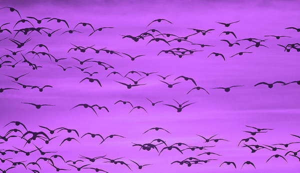 Wall Art - Photograph - Flight In Ultra Violet by SharaLee Art