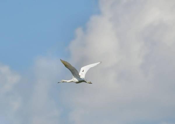 Photograph - Cayman Flight by JAMART Photography