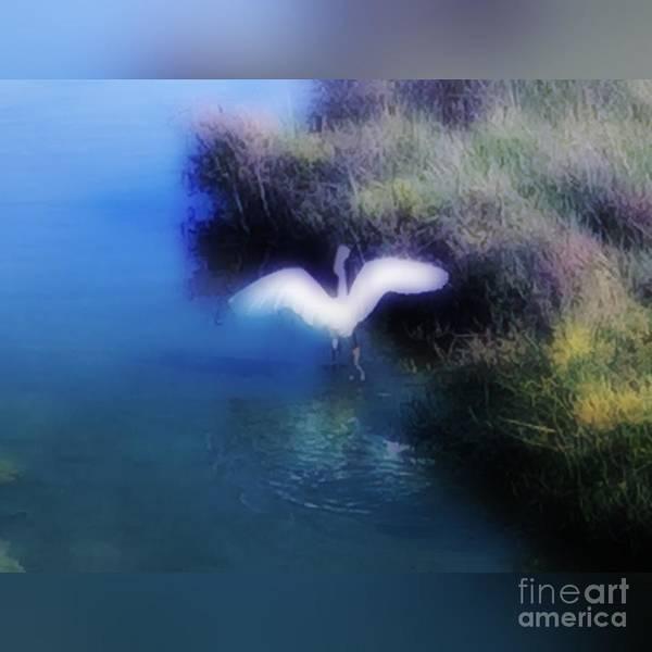 Photograph - Flight by Jenny Revitz Soper