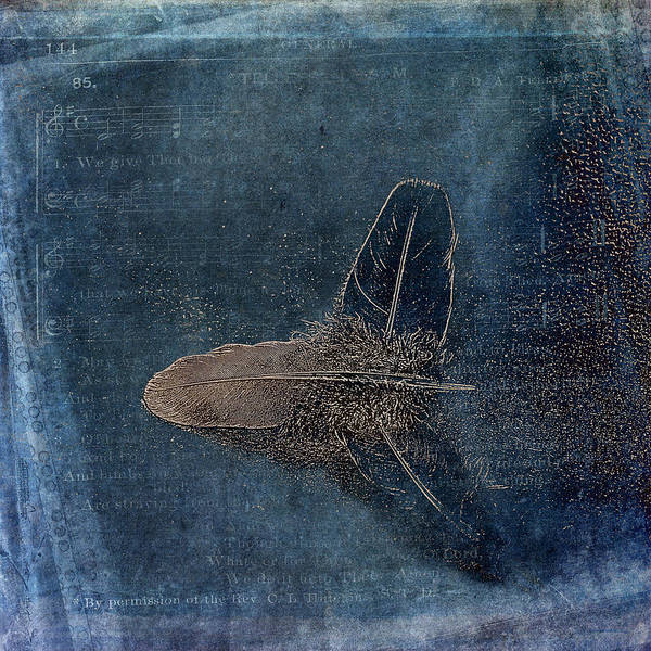 Photograph - Flight Of A Feather by Randi Grace Nilsberg
