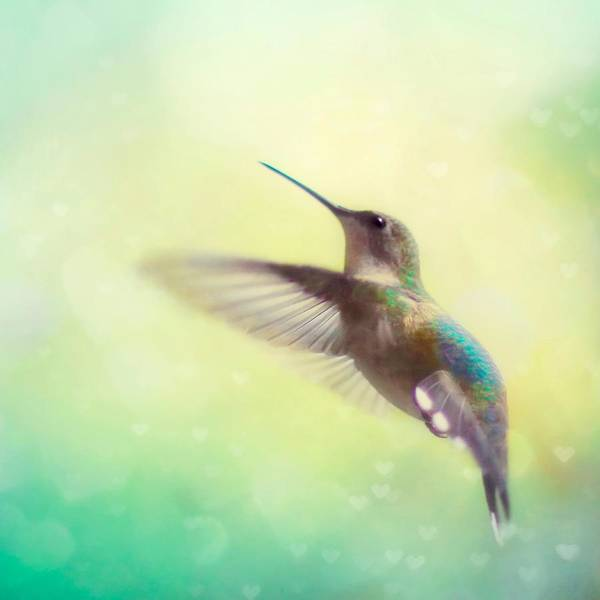Beautiful Hummingbird Photograph - Flight Of Fancy - Square Version by Amy Tyler