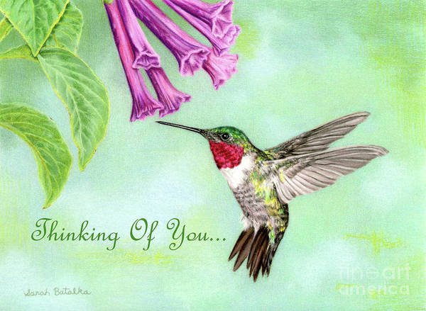 Pollinator Wall Art - Drawing - Flight Of Fancy- Thinking Of You Cards by Sarah Batalka