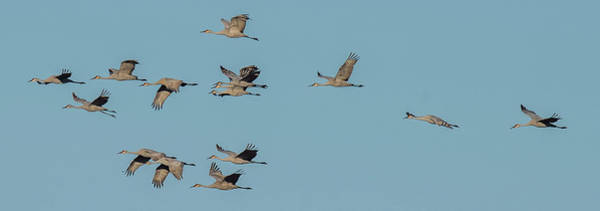 Wall Art - Photograph - Flight Of The Cranes by Paul Freidlund