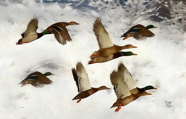 Photograph - Flight Of The Ducks by Andrea Kollo