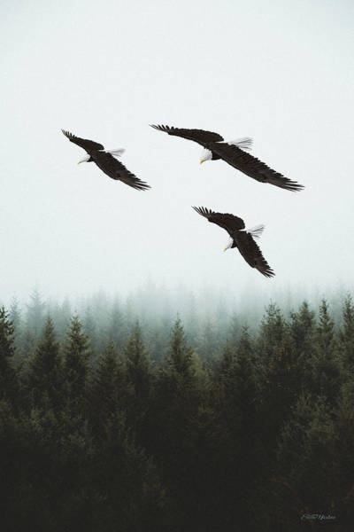 Photograph - Flight Of The Eagles by Ericamaxine Price