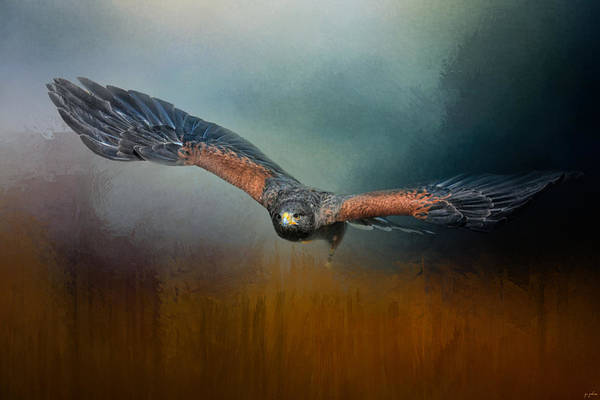 Photograph - Flight Of The Harris Hawk by Jai Johnson